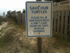 Protect the Pawleys Loggerhead Turtles!