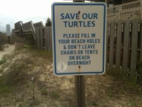 Protect the Pawleys Loggerhead Turtles!