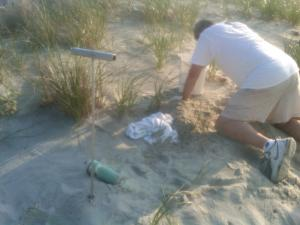 Relocating the Pawleys Nest Safely within the Dunes
